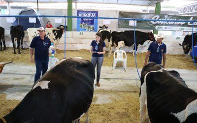Curso de Zootecnia da FAMA realizará IV Dia do Zootecnista; Bovinocultura leiteira é tema do evento
